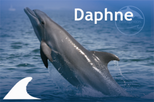 Adopt a Dolphin from the Slovenian Sea – a wonderful gift for the holidays